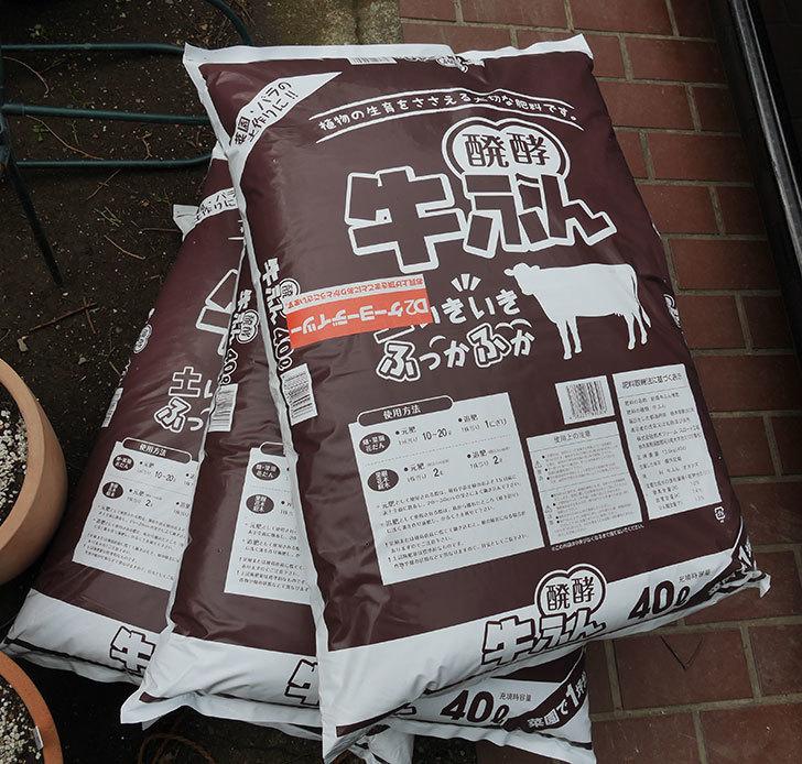 醗酵牛ふん40Lを3個ケイヨーデイツーで買って来た1.jpg