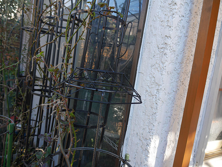 鉢スタンドを連結したオベリスクに飾りを付けた。2021年-002.jpg