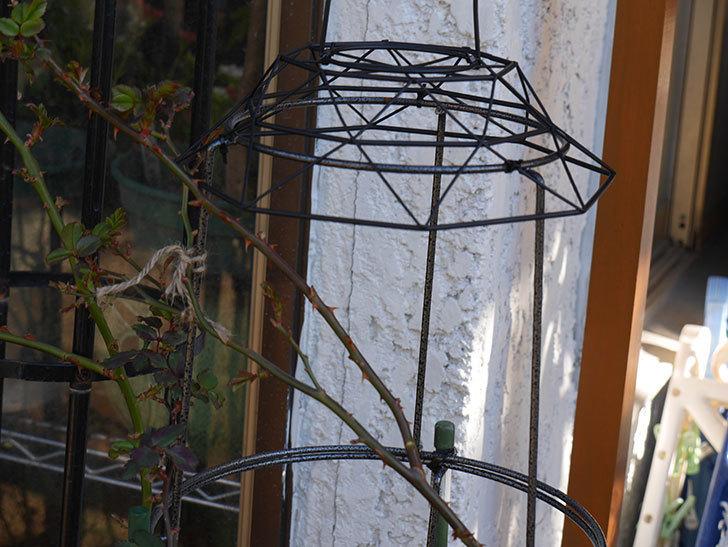 鉢スタンドを連結したオベリスクに飾りを付けた。2021年-010.jpg