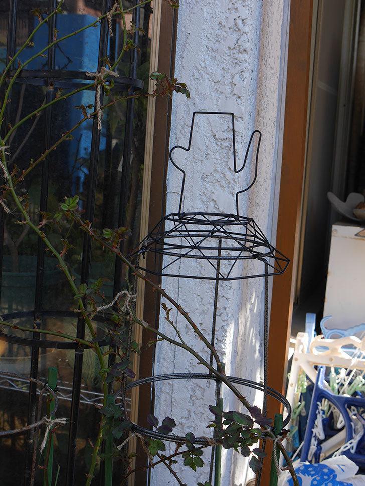 鉢スタンドを連結したオベリスクに飾りを付けた。2021年-012.jpg