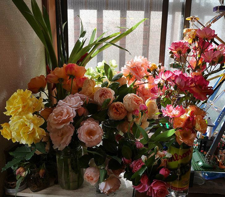 雨の前にバラの花を切ってきた。2019年-1.jpg
