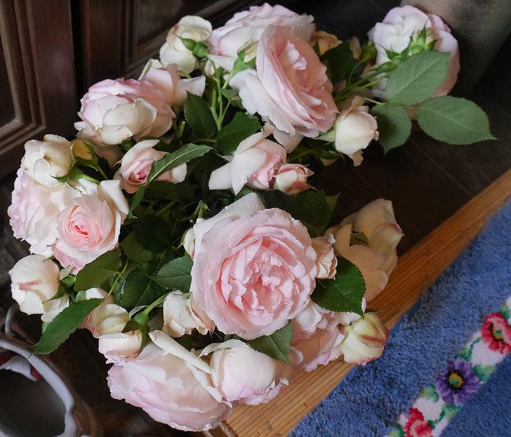 雨の前にバラの花を切ってきた。2019年-10.jpg