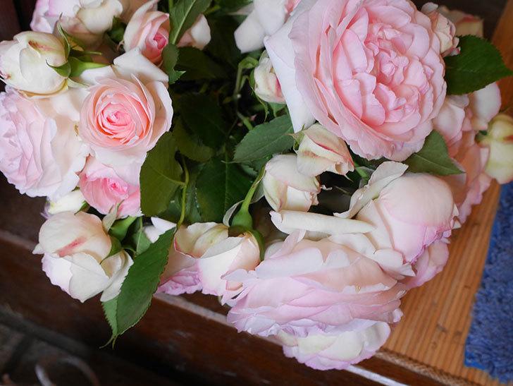 雨の前にバラの花を切ってきた。2019年-11.jpg
