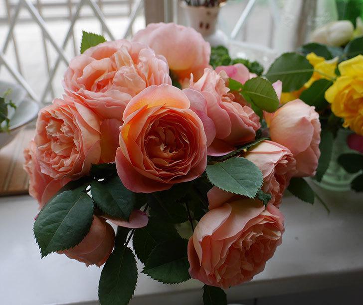 雨の前にバラの花を切ってきた。2019年-14.jpg