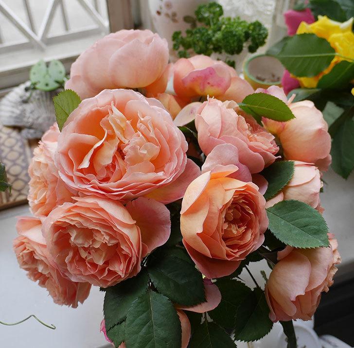 雨の前にバラの花を切ってきた。2019年-16.jpg