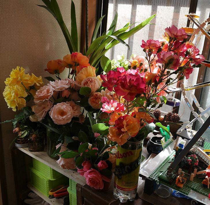 雨の前にバラの花を切ってきた。2019年-7.jpg