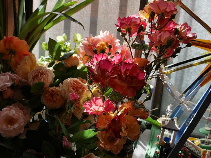 雨の前にバラの花を切ってきた。2019年-8.jpg