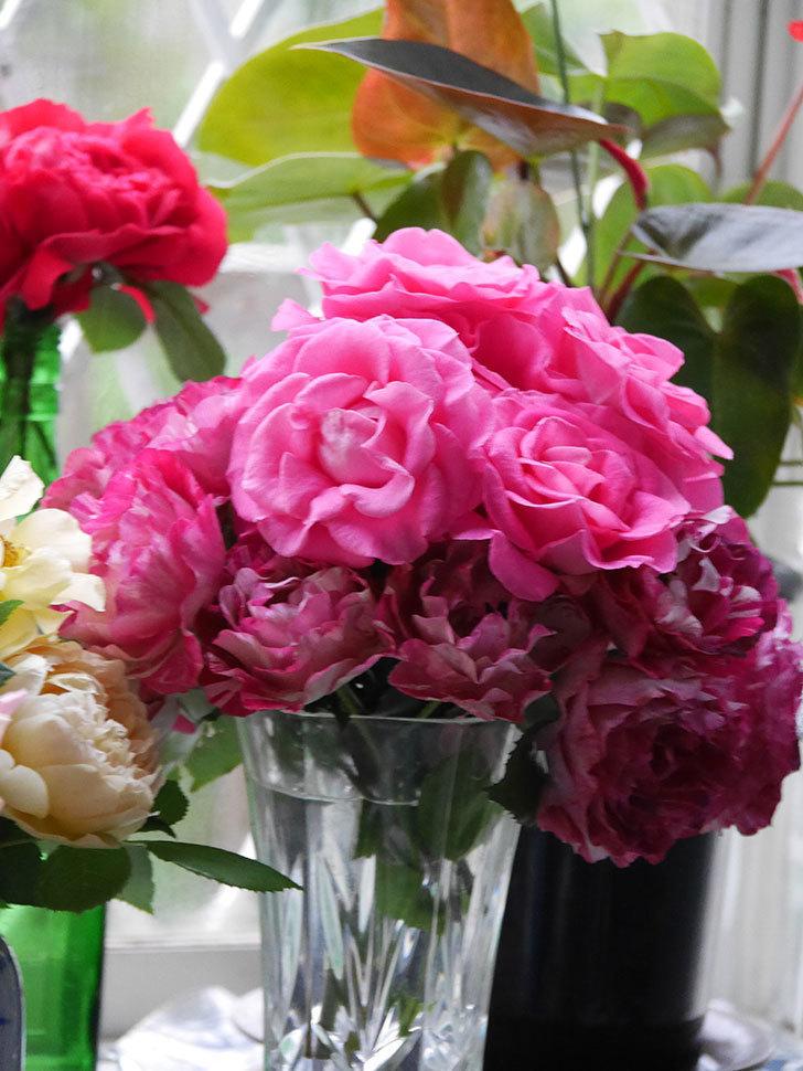 雨予報だったので咲いているバラを切り花にした。2020年-002.jpg