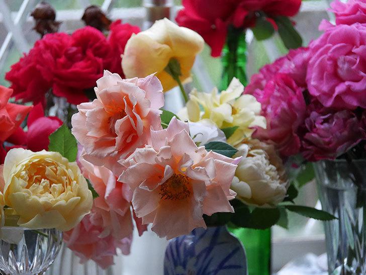 雨予報だったので咲いているバラを切り花にした。2020年-003.jpg