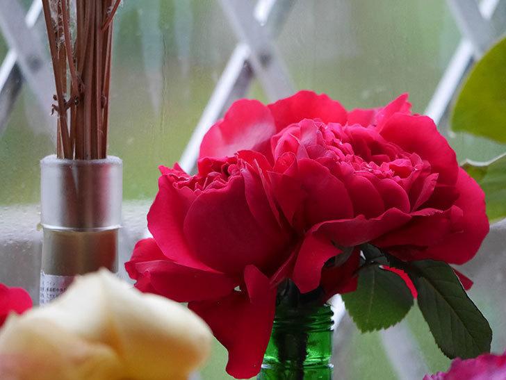 雨予報だったので咲いているバラを切り花にした。2020年-004.jpg