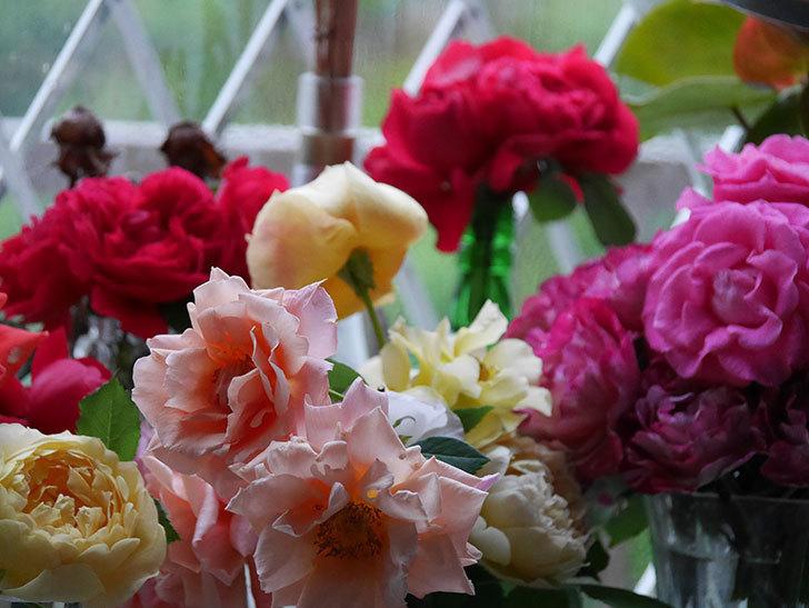 雨予報だったので咲いているバラを切り花にした。2020年-005.jpg