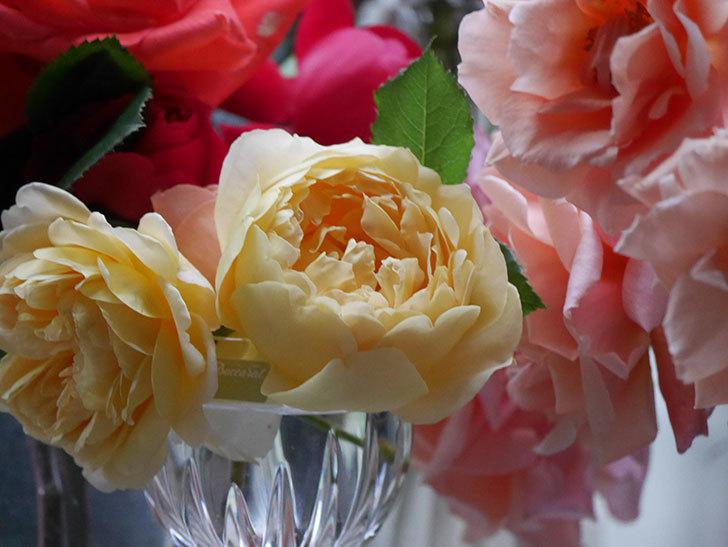雨予報だったので咲いているバラを切り花にした。2020年-006.jpg