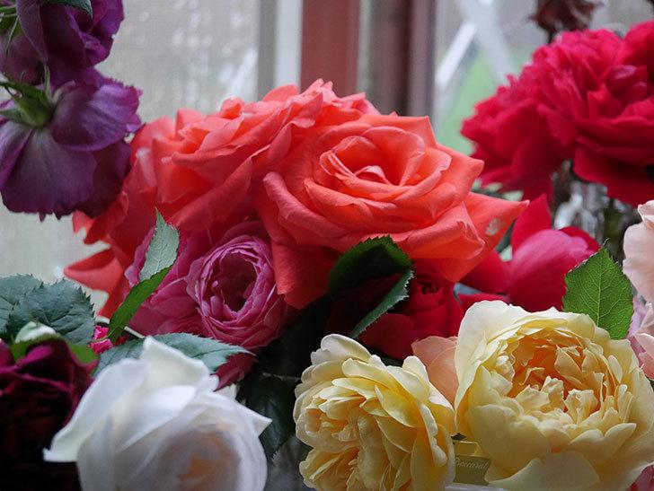雨予報だったので咲いているバラを切り花にした。2020年-007.jpg