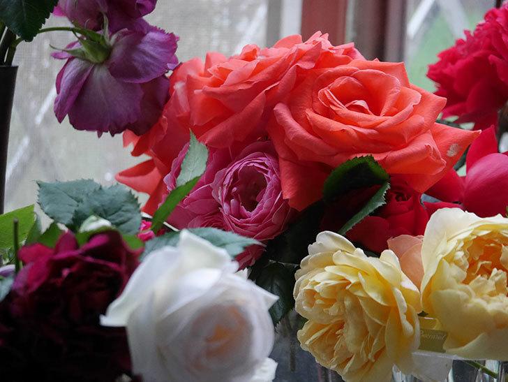 雨予報だったので咲いているバラを切り花にした。2020年-008.jpg
