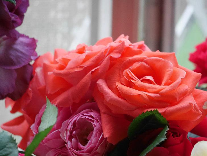雨予報だったので咲いているバラを切り花にした。2020年-009.jpg
