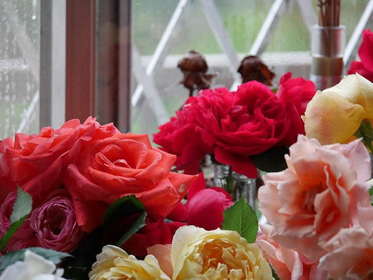 雨予報だったので咲いているバラを切り花にした。2020年-010.jpg