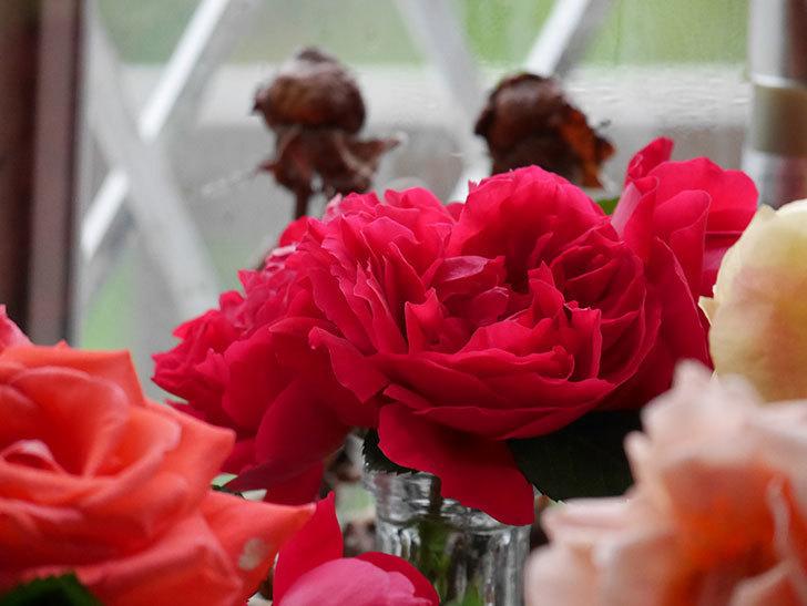 雨予報だったので咲いているバラを切り花にした。2020年-011.jpg