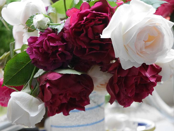 雨予報だったので咲いているバラを切り花にした。2020年-012.jpg