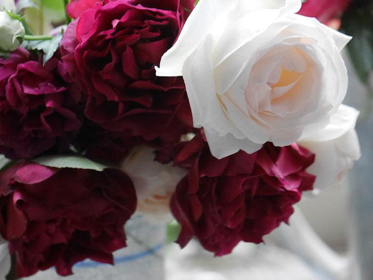 雨予報だったので咲いているバラを切り花にした。2020年-014.jpg
