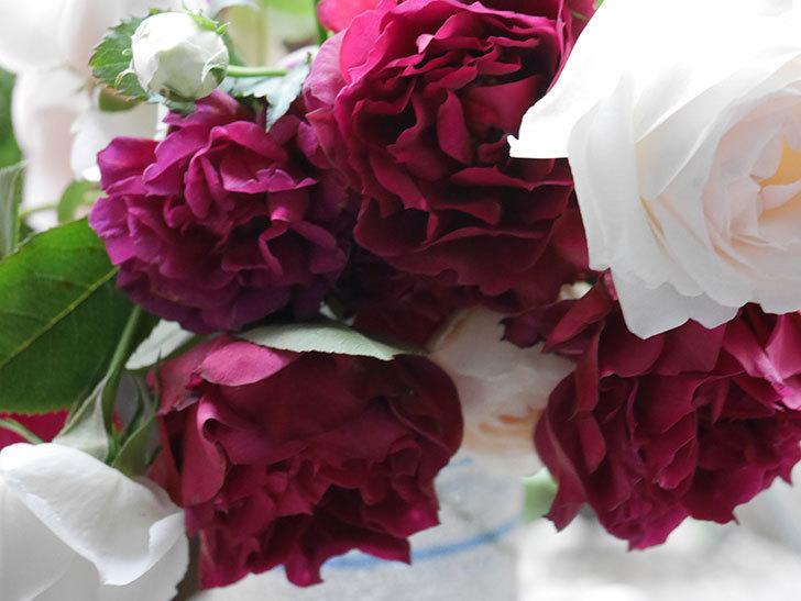 雨予報だったので咲いているバラを切り花にした。2020年-015.jpg