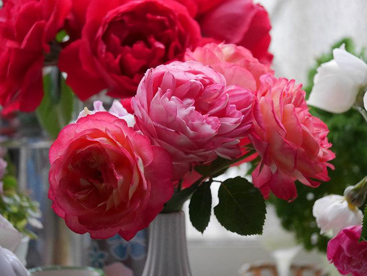 雨予報だったので咲いているバラを切り花にした。2020年-016.jpg