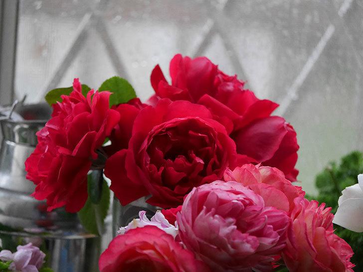 雨予報だったので咲いているバラを切り花にした。2020年-017.jpg