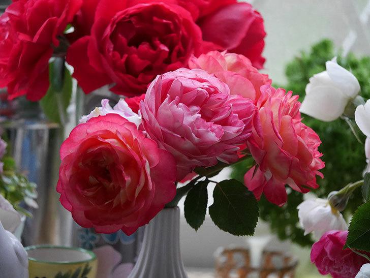 雨予報だったので咲いているバラを切り花にした。2020年-018.jpg