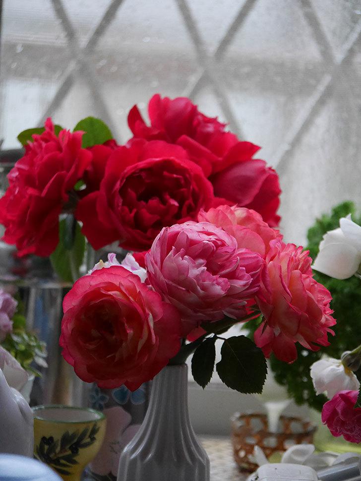 雨予報だったので咲いているバラを切り花にした。2020年-019.jpg