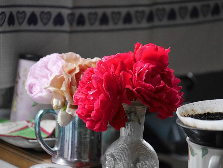 雨予報だったので咲いているバラを切り花にした。2020年-020.jpg