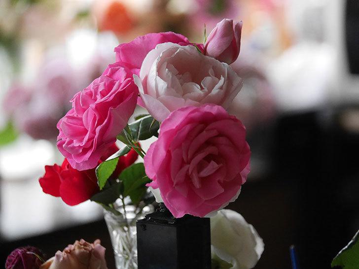 雨予報だったので咲いているバラを切り花にした。2020年-021.jpg