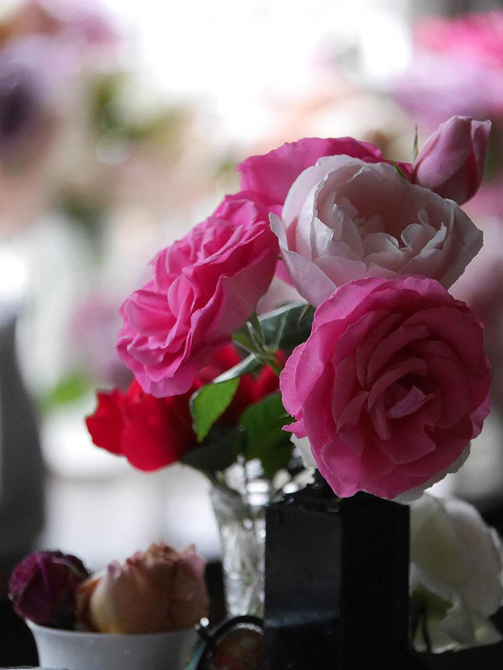 雨予報だったので咲いているバラを切り花にした。2020年-022.jpg