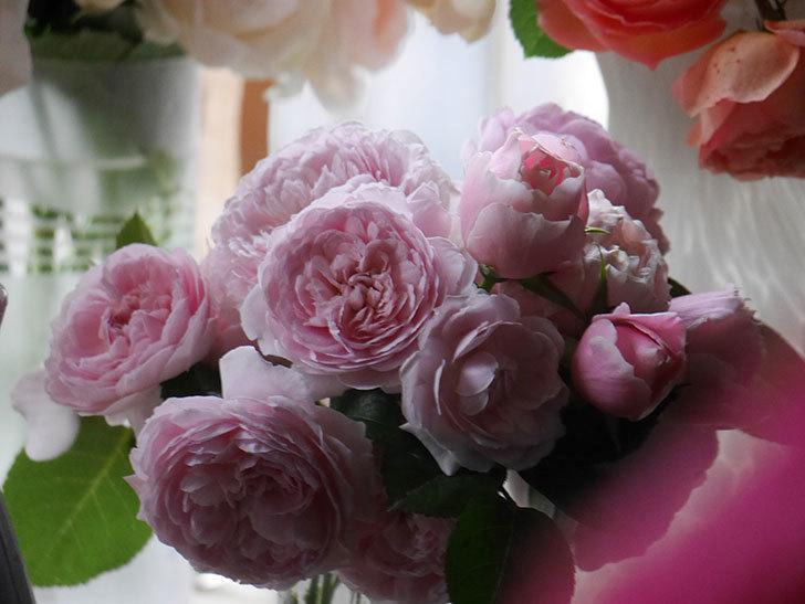 雨予報だったので咲いているバラを切り花にした。2020年-023.jpg