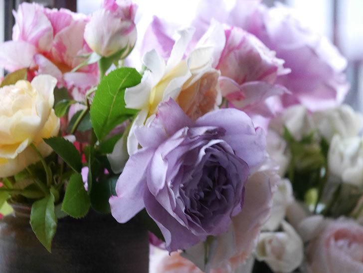 雨予報だったので咲いているバラを切り花にした。2020年-024.jpg