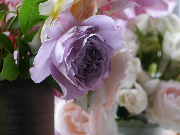 雨予報だったので咲いているバラを切り花にした。2020年-026.jpg