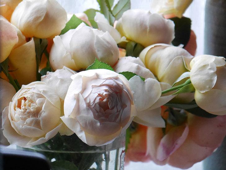 雨予報だったので咲いているバラを切り花にした。2020年-027.jpg