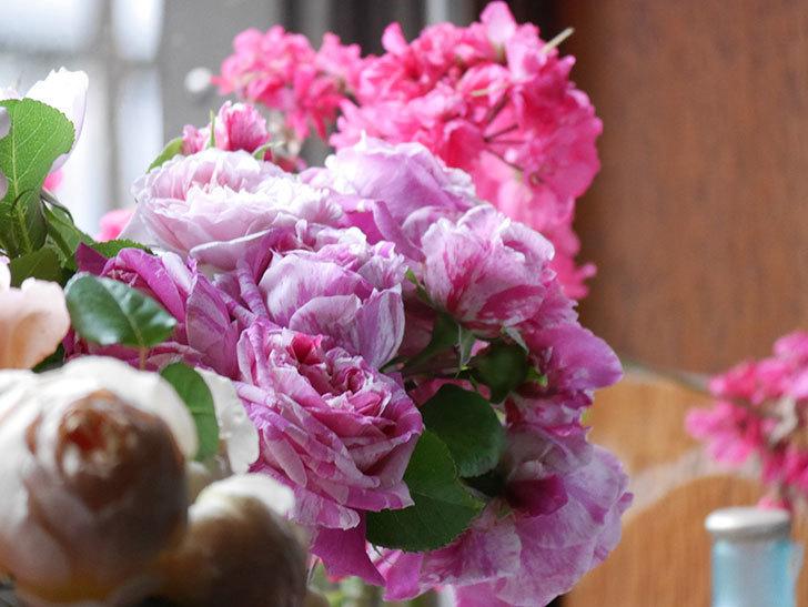 雨予報だったので咲いているバラを切り花にした。2020年-028.jpg