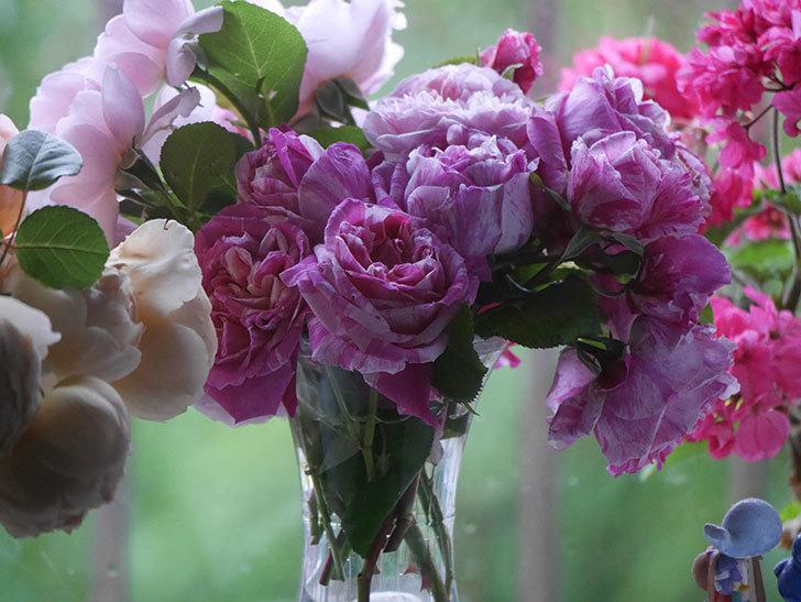 雨予報だったので咲いているバラを切り花にした。2020年-029.jpg