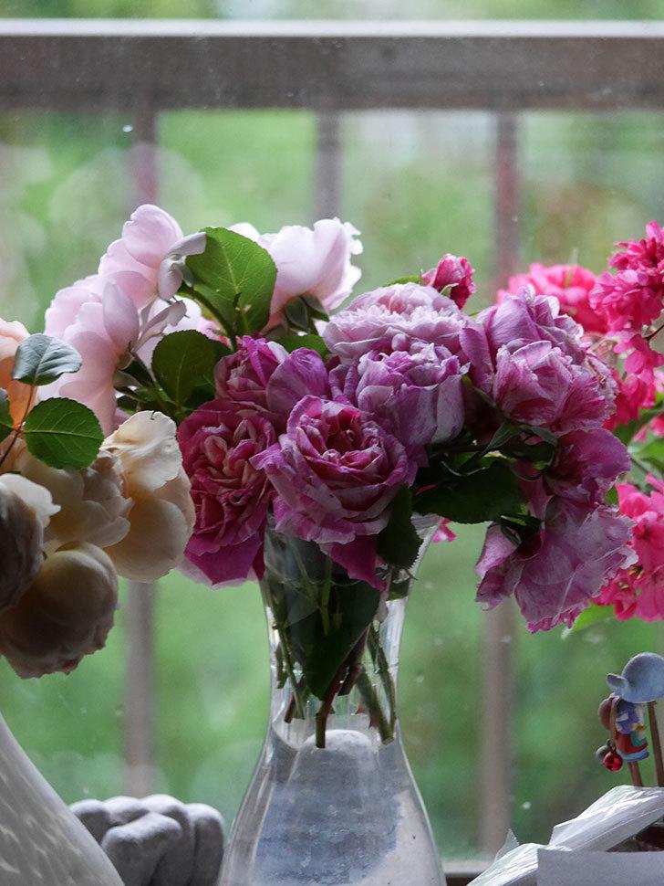 雨予報だったので咲いているバラを切り花にした。2020年-030.jpg