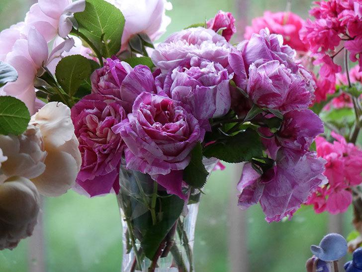 雨予報だったので咲いているバラを切り花にした。2020年-031.jpg