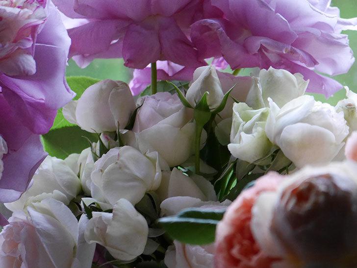 雨予報だったので咲いているバラを切り花にした。2020年-033.jpg
