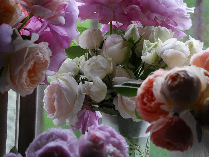 雨予報だったので咲いているバラを切り花にした。2020年-034.jpg