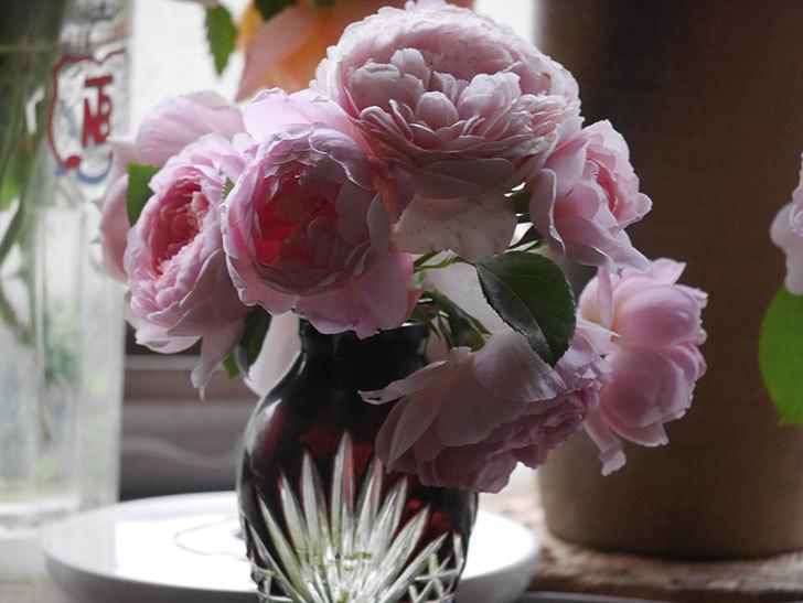 雨予報だったので咲いているバラを切り花にした。2020年-035.jpg