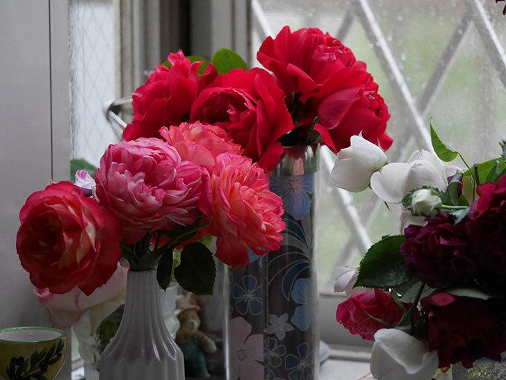 雨予報だったので咲いているバラを切り花にした。2020年-037.jpg