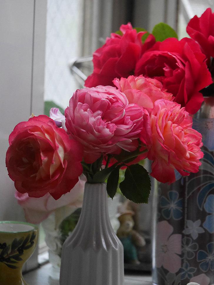 雨予報だったので咲いているバラを切り花にした。2020年-038.jpg