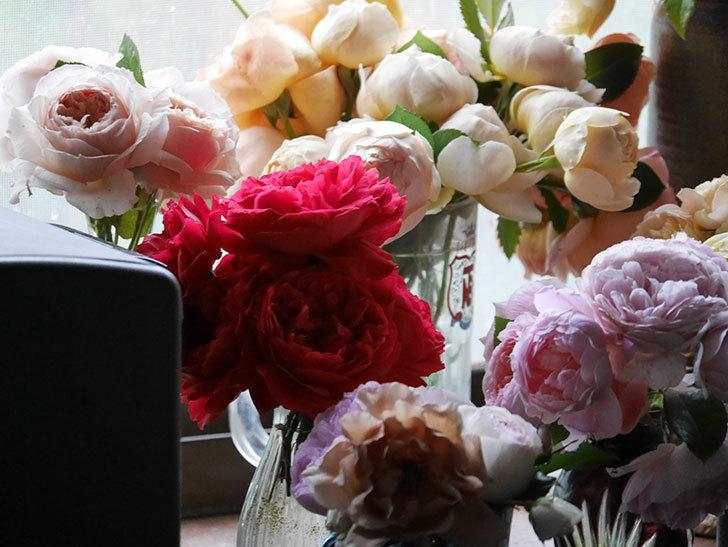 雨予報だったので咲いているバラを切り花にした。2020年-041.jpg