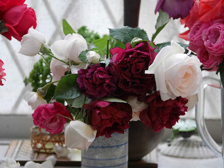 雨予報だったので咲いているバラを切り花にした。2020年-042.jpg
