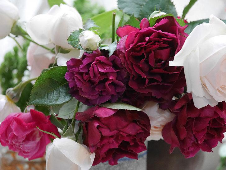 雨予報だったので咲いているバラを切り花にした。2020年-043.jpg