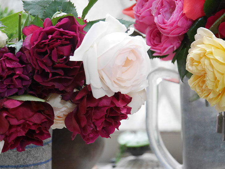 雨予報だったので咲いているバラを切り花にした。2020年-045.jpg
