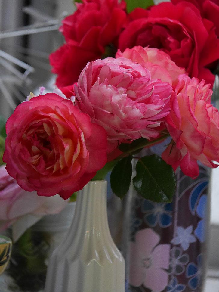 雨予報だったので咲いているバラを切り花にした。2020年-046.jpg