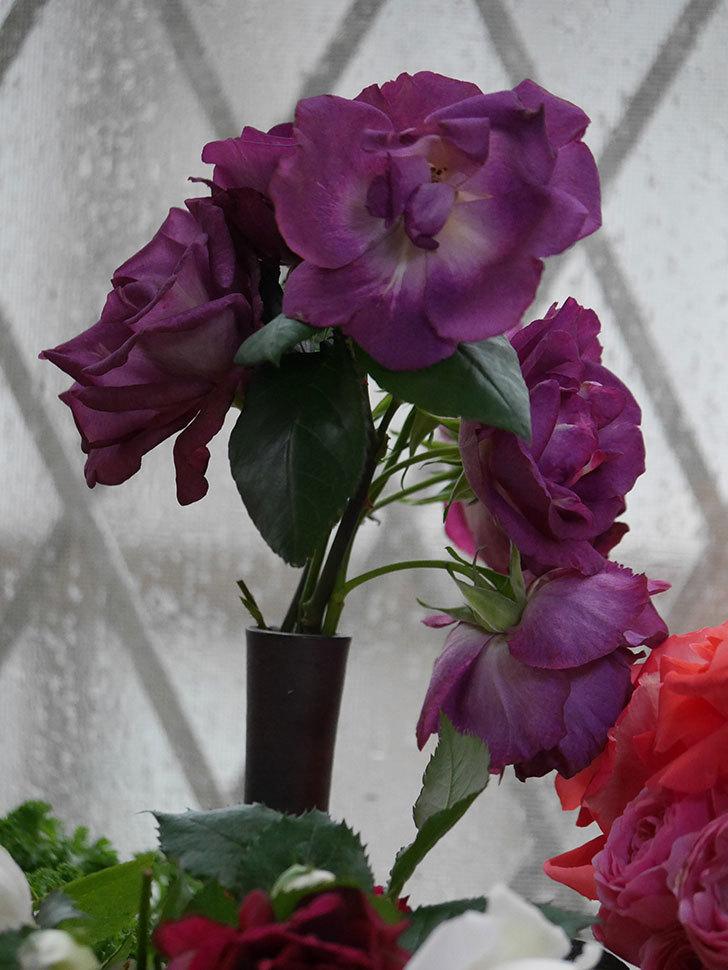 雨予報だったので咲いているバラを切り花にした。2020年-047.jpg